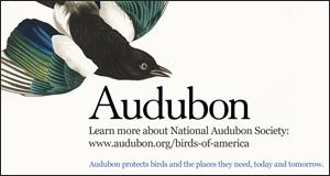 vignette_Audubon